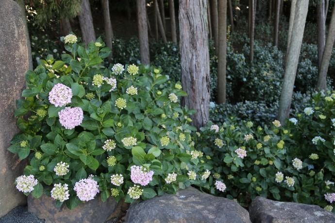 花(菖蒲、紫陽花、百合) 366