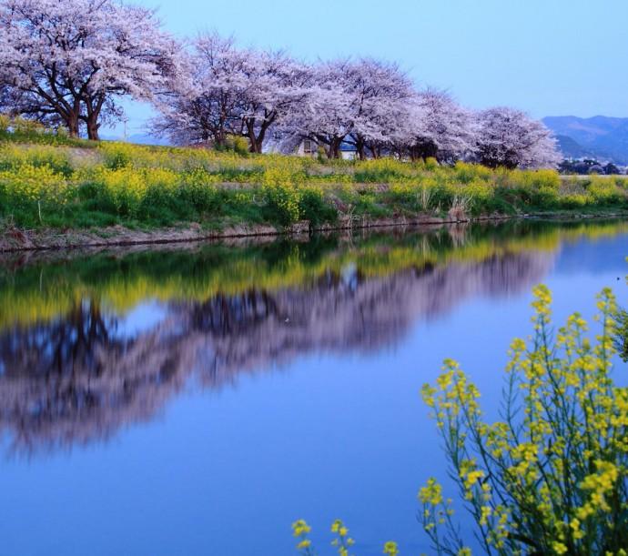 koisuru sennan award iyashi-no-haru