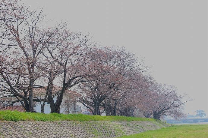 onosatogawa re  IMG_5687