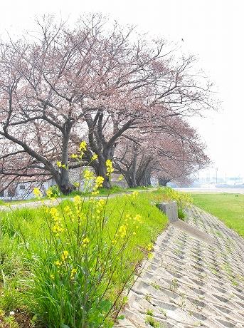 onosatogawa re IMG_5705