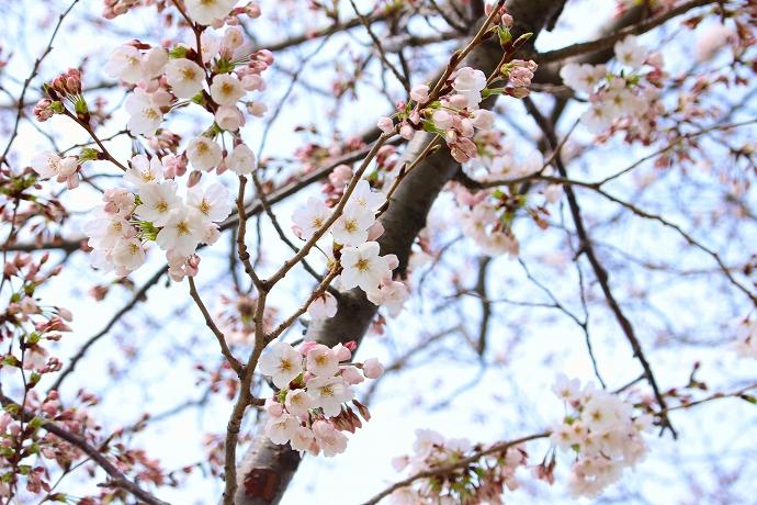 onosatogawaIMG_5691